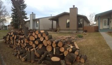 Penticton Tree Removal