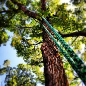 Penticton Tree Service