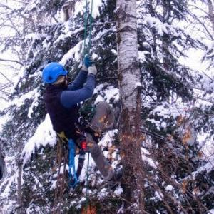 Penticton Tree Removal