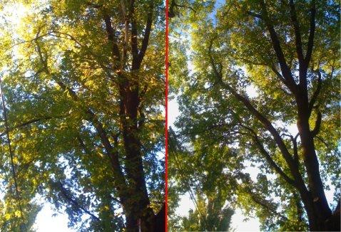 Penticton Tree Trimming