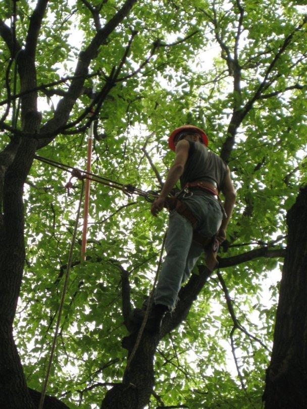 Penticton Tree Pruning